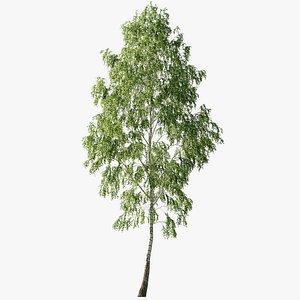 3D Natural Birch 2 - 16meters