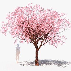 3D cherry tree flowering prunus avium D model