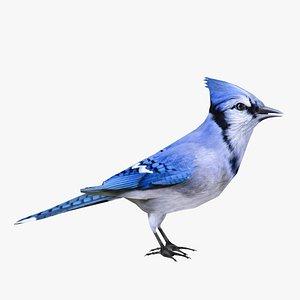 Blue Jay bird model