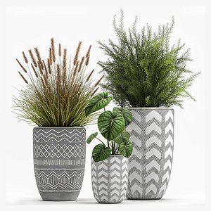 Houseplants in a flowerpot for the interior 1025 3D model