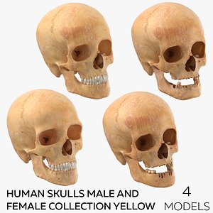 Human Skulls Male And Female Collection Yellow - 4 models model