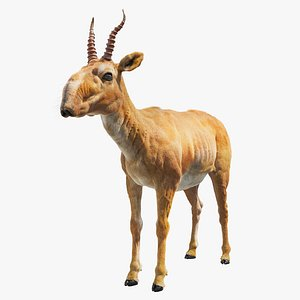 3D model saiga antelope