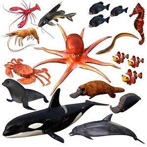 3D aquatic animal water