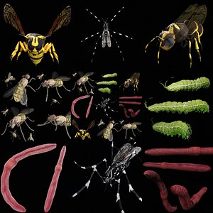 3D insect rigged