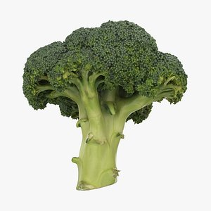 broccoli vegetable model