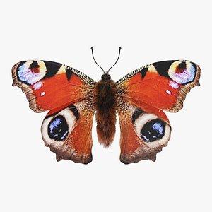 Peacock Butterfly model