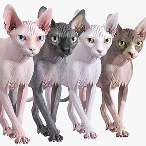 3D Sphynx Cat Animated Collection