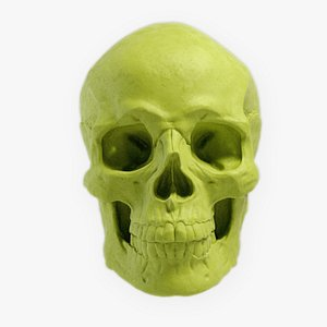 Skull and face parts model