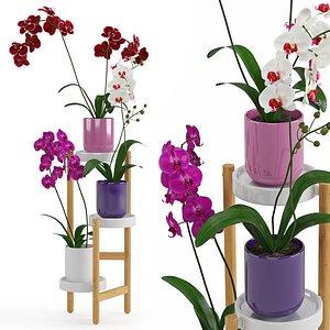 3D Houseplant 58