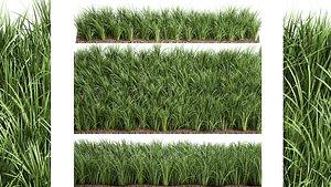 Ornamental grass  941