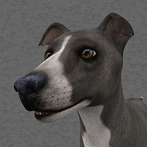 0012 Rigged Male Dog 3D