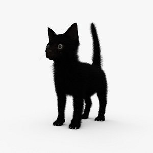Black Kitten HD 3D model