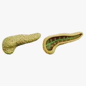 3D model Pancreas Set