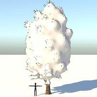 Snow Carolina Poplar Tree