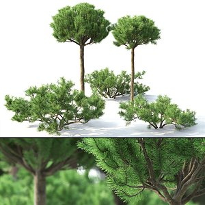3D trees trunk alpine model