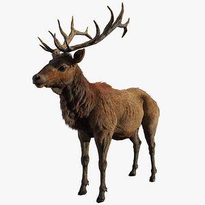 zbrush horns model