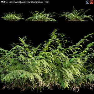 Mother spleenwort - Asplenium bulbiferum - Fern 02 3D model