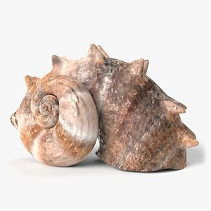 3D seashell shell sea model