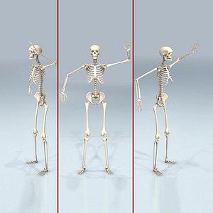 3D human bones