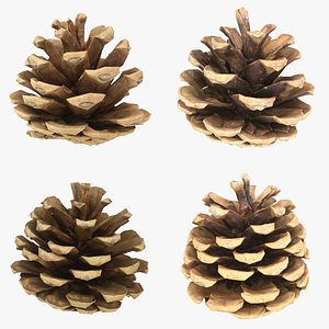 3D Pine Cone Set 2