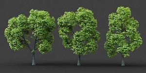 XfrogPlants Norway Maple - Acer Platanoides 3D model