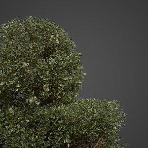 2021 shrub 3D model