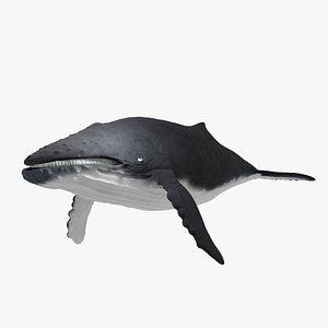 humpback 3D
