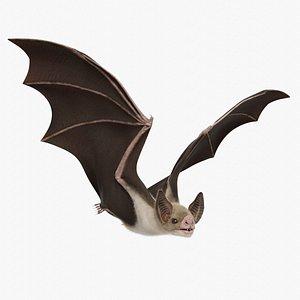 3D realistic vampire bat model