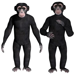 3D model fully rigged low poly Chimpanzee
