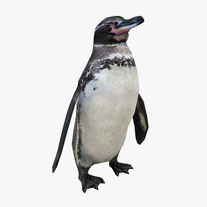 penguin bird animal 3D