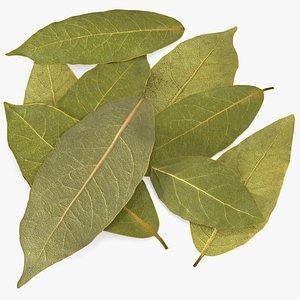 dry laurel leaves 3D model