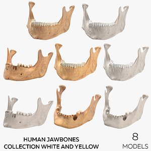 3D model Human Jawbones Collection White and Yellow - 8 models