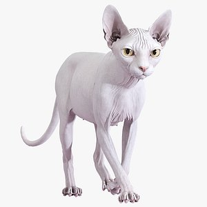 3D sphynx cat walking pose model
