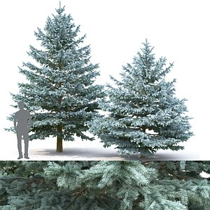 3D trees spruce pungens