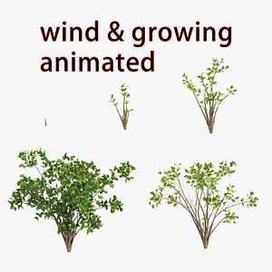 3D bush grow wind