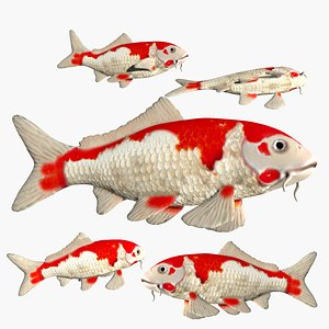 fully rigged low poly Koi fish 3D model