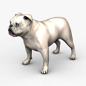 3D English Bulldog Male White model