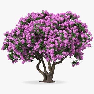 3D model Rhododendron Purple Flower Tree