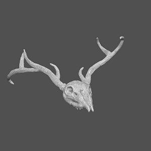 3D skull stag