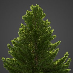 3D cypress tree nature model