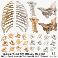 Human Female Ribs Sternum Spine and Pelvis Bones Collection White and Yellow - 52 models