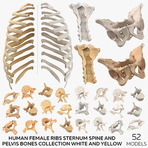Human Female Ribs Sternum Spine and Pelvis Bones Collection White and Yellow - 52 models 3D