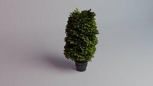 japonikum elegant aurea 3D