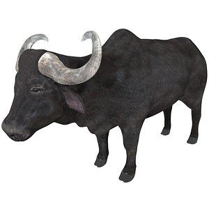 3D buffalo rigged model