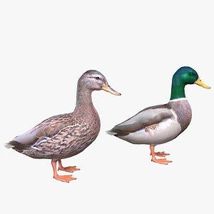 3D Mallard Duck Male-Female model