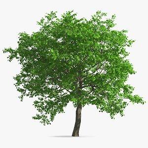 tree green nuts food 3D model