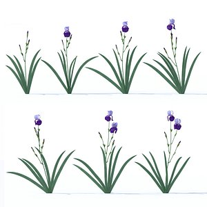 iris lilac 3D model