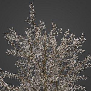2021 PBR Plum Collection - Prunus Domestica 3D model
