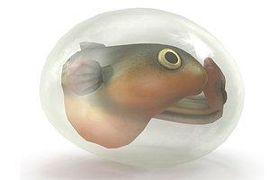 fish larva 3D model