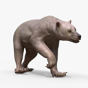 Bear Skin Rigged Houdini 3D model